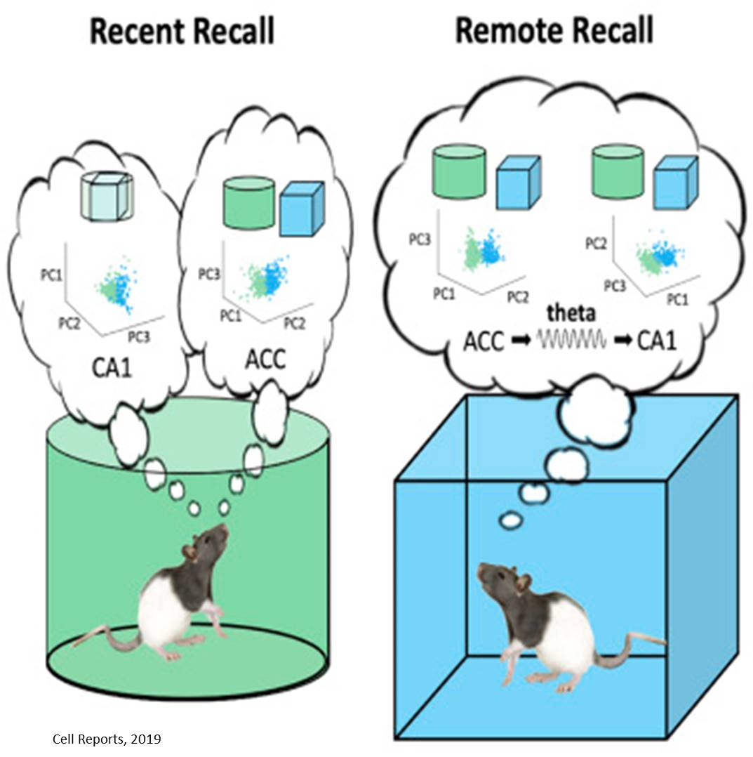 New insight into long-term memory retrieval
