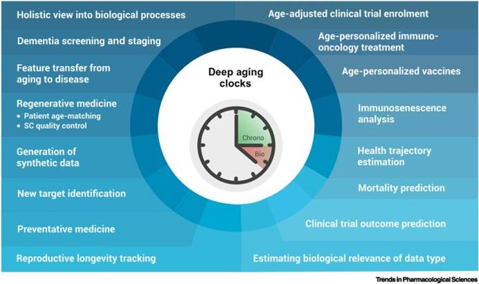 AI-based biomarkers of aging and longevity