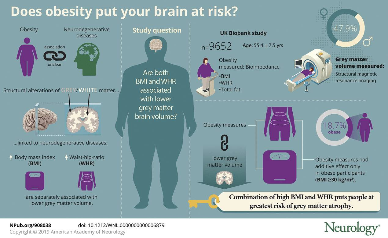 Extra weight in 60s is associated with brain thinning years later
