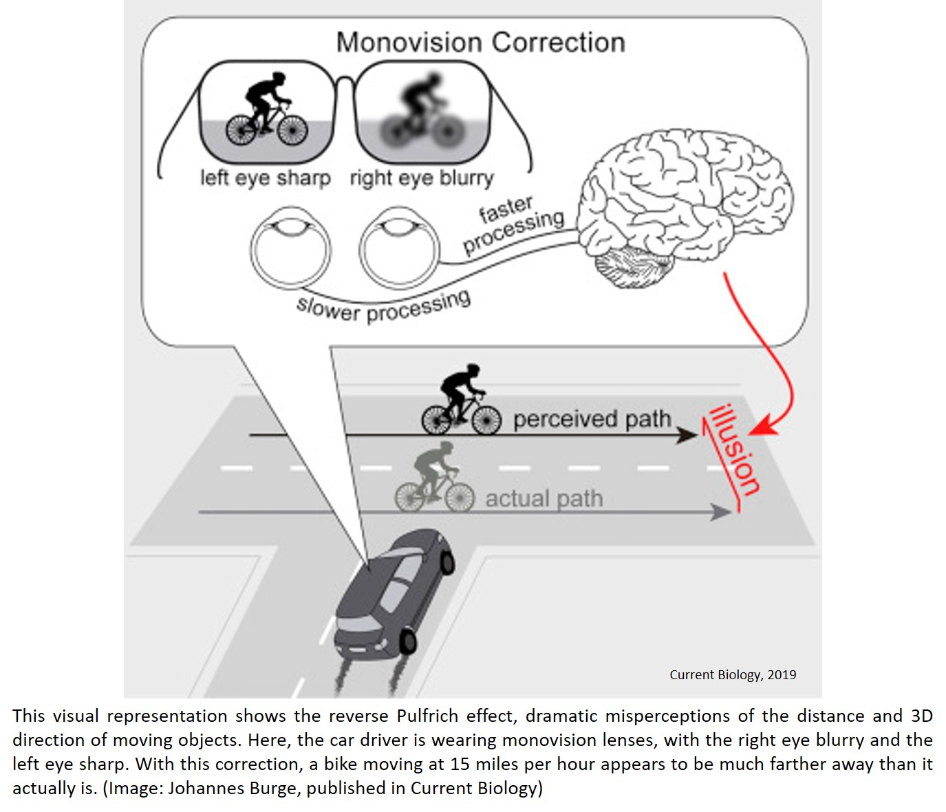Monovision and the Misperception of Motion
