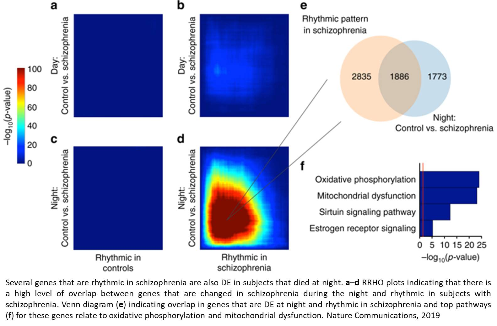 Disruption in circadian gene expression in the prefrontal cortex in schizophrenia