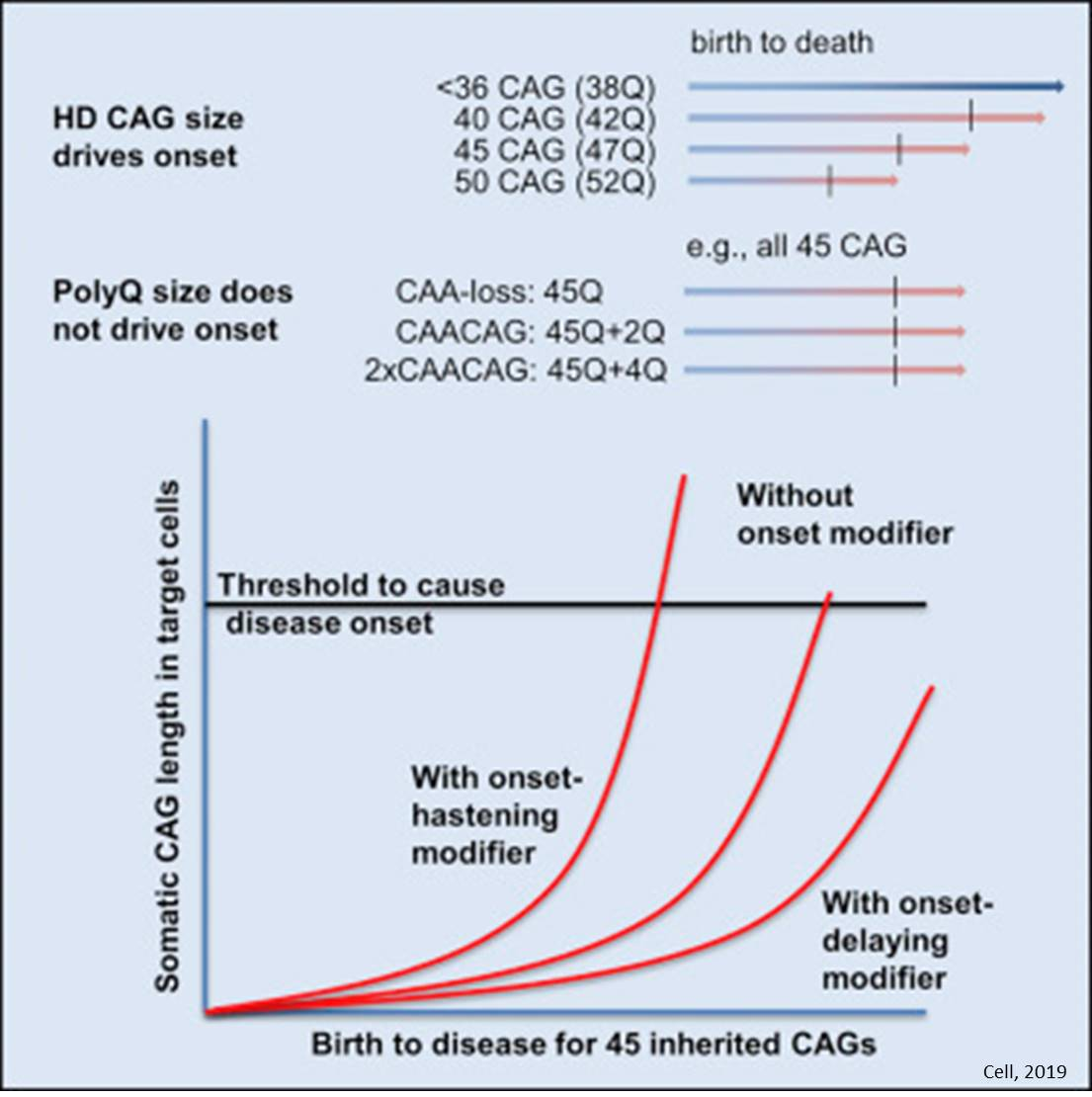 The theory about the timing of Huntington's disease onset challenged!