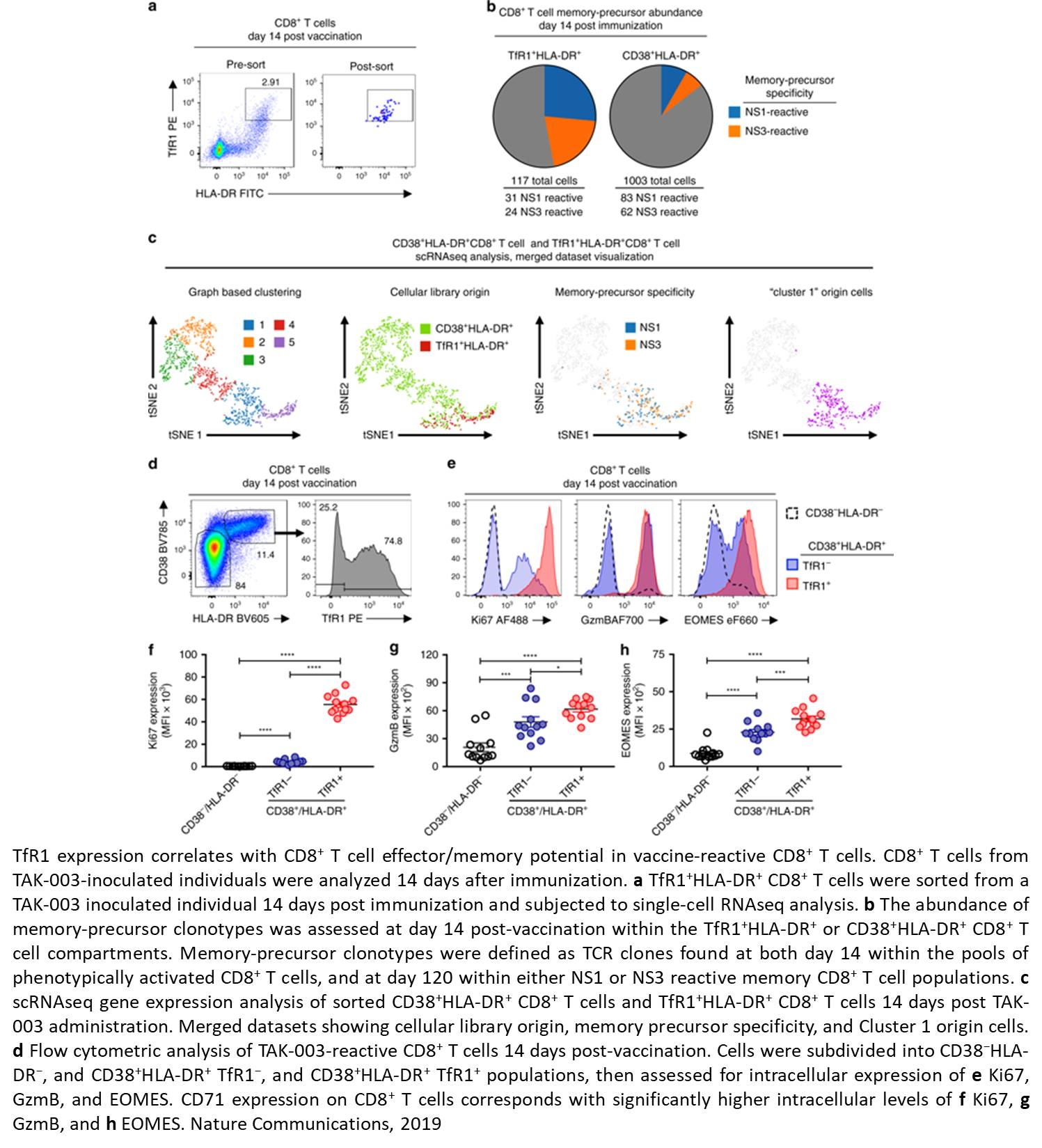 The mechanism of dengue vaccine-induced T cell immunity