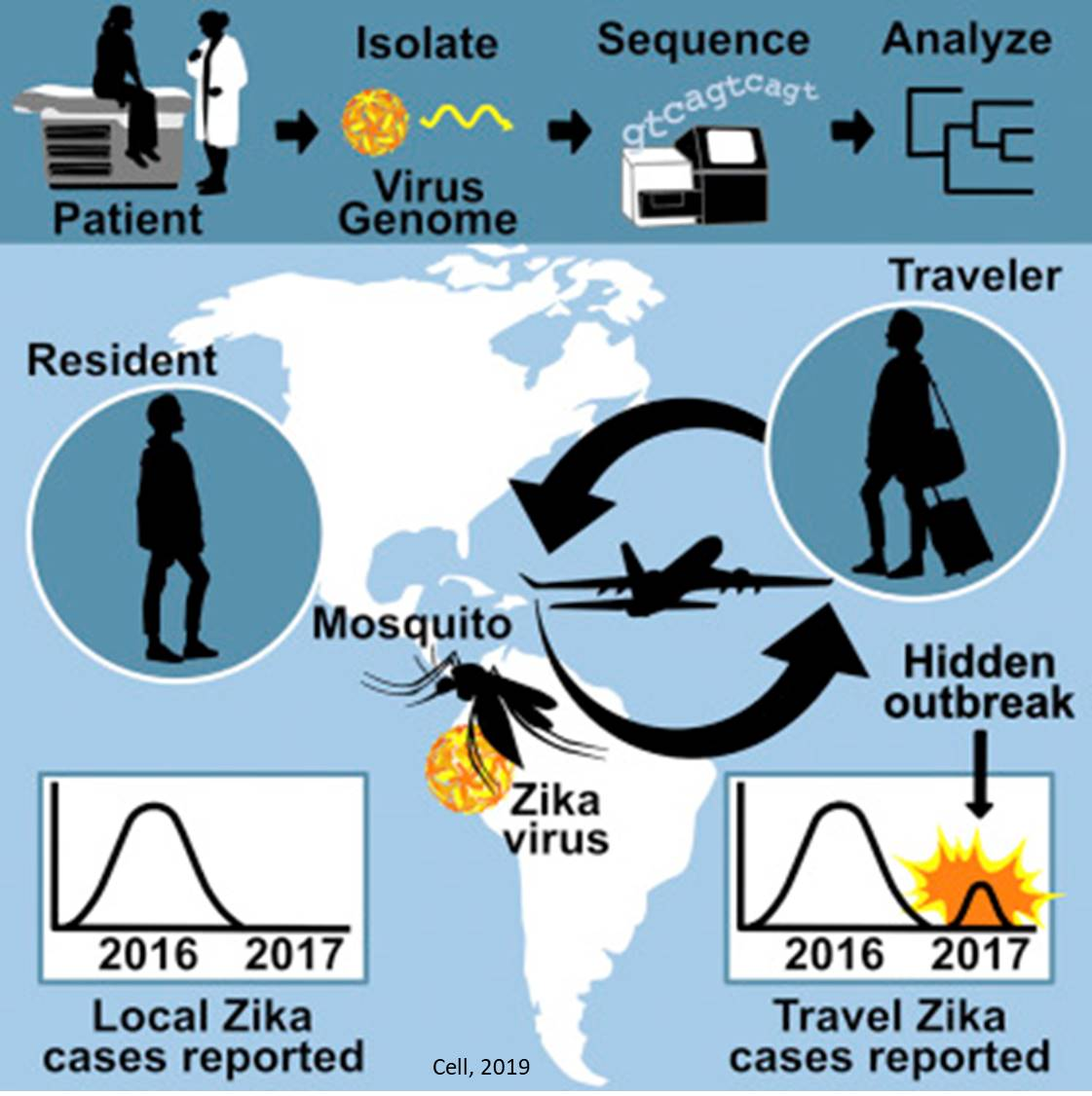 Silent spread of Zika detected using genomic and travel surveillance