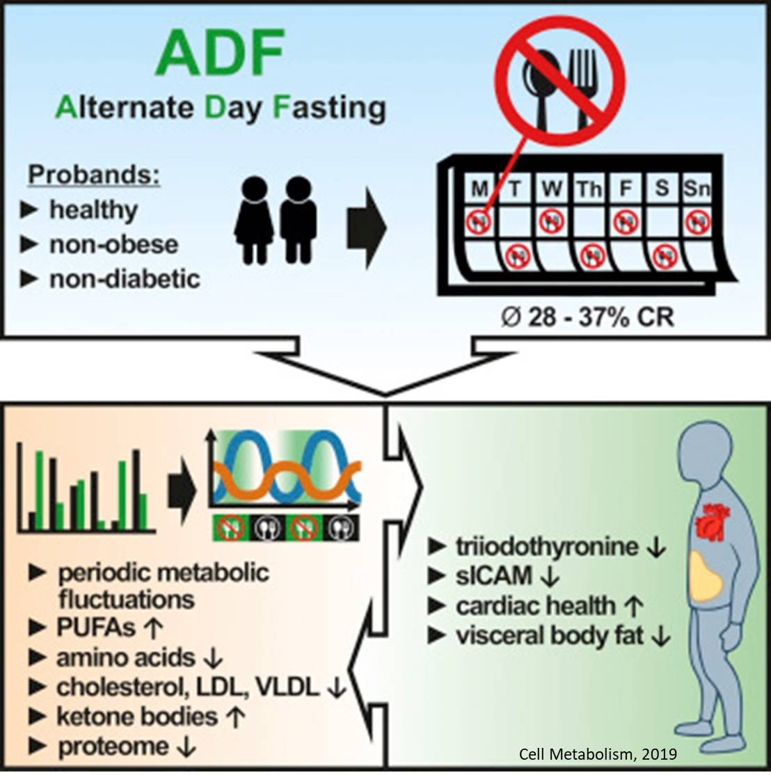 Is alternate-day fasting a safe alternative to caloric restriction?