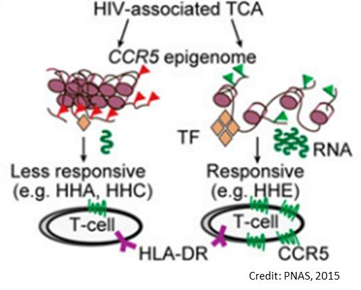Epigenetic mechanisms control HIV susceptibility