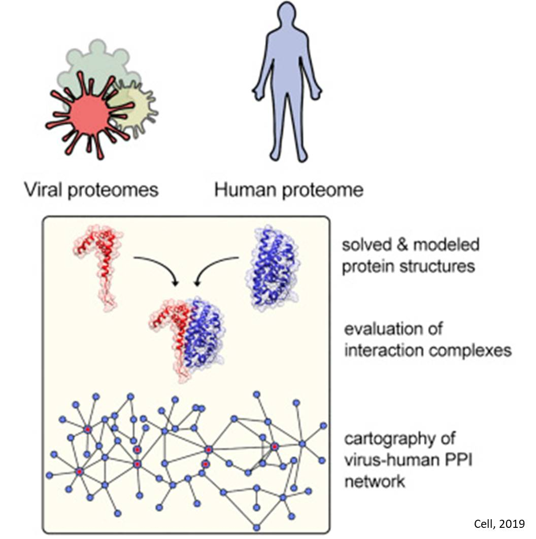 New Algorithm Predicts Interactions Between Human and Viral Proteins