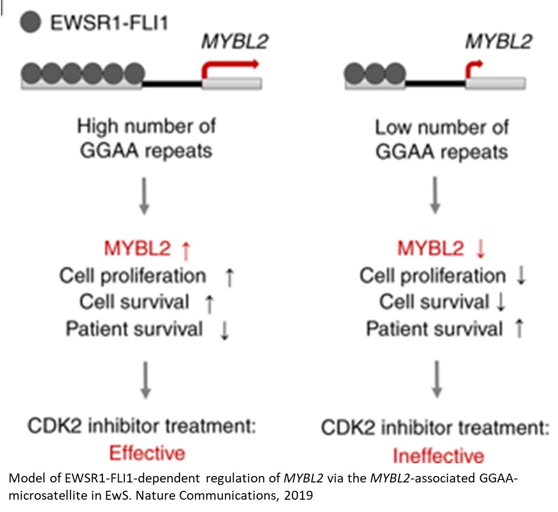 Difference in the regulatory elements might determine the variations in tumorigenesis