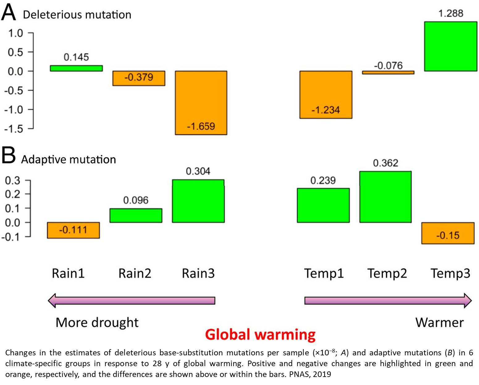Genetic responses of wheat to global warming