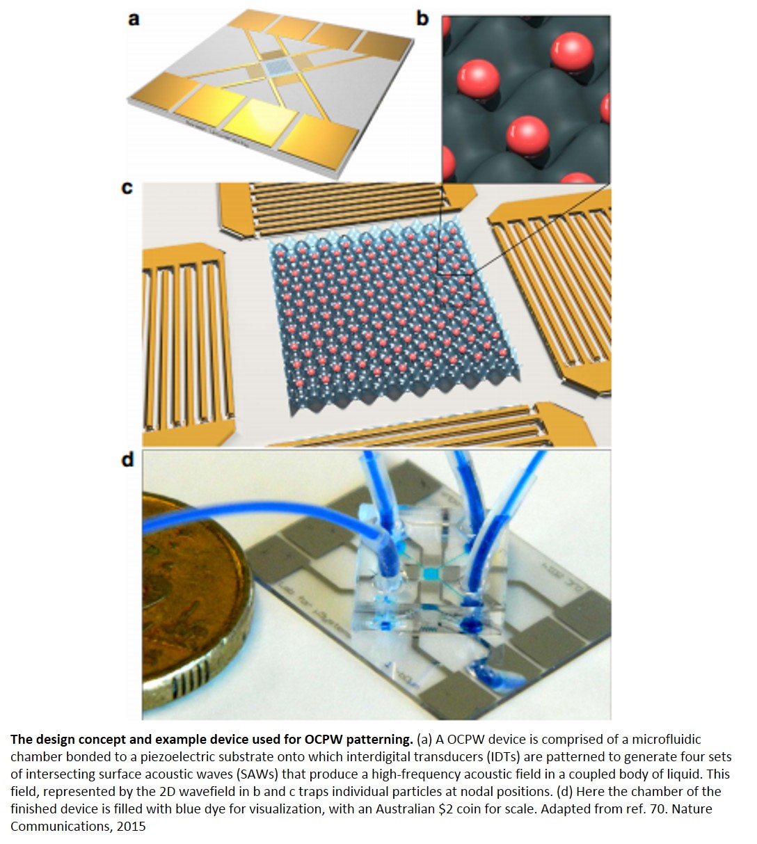 Separating single cell by acoustic waves