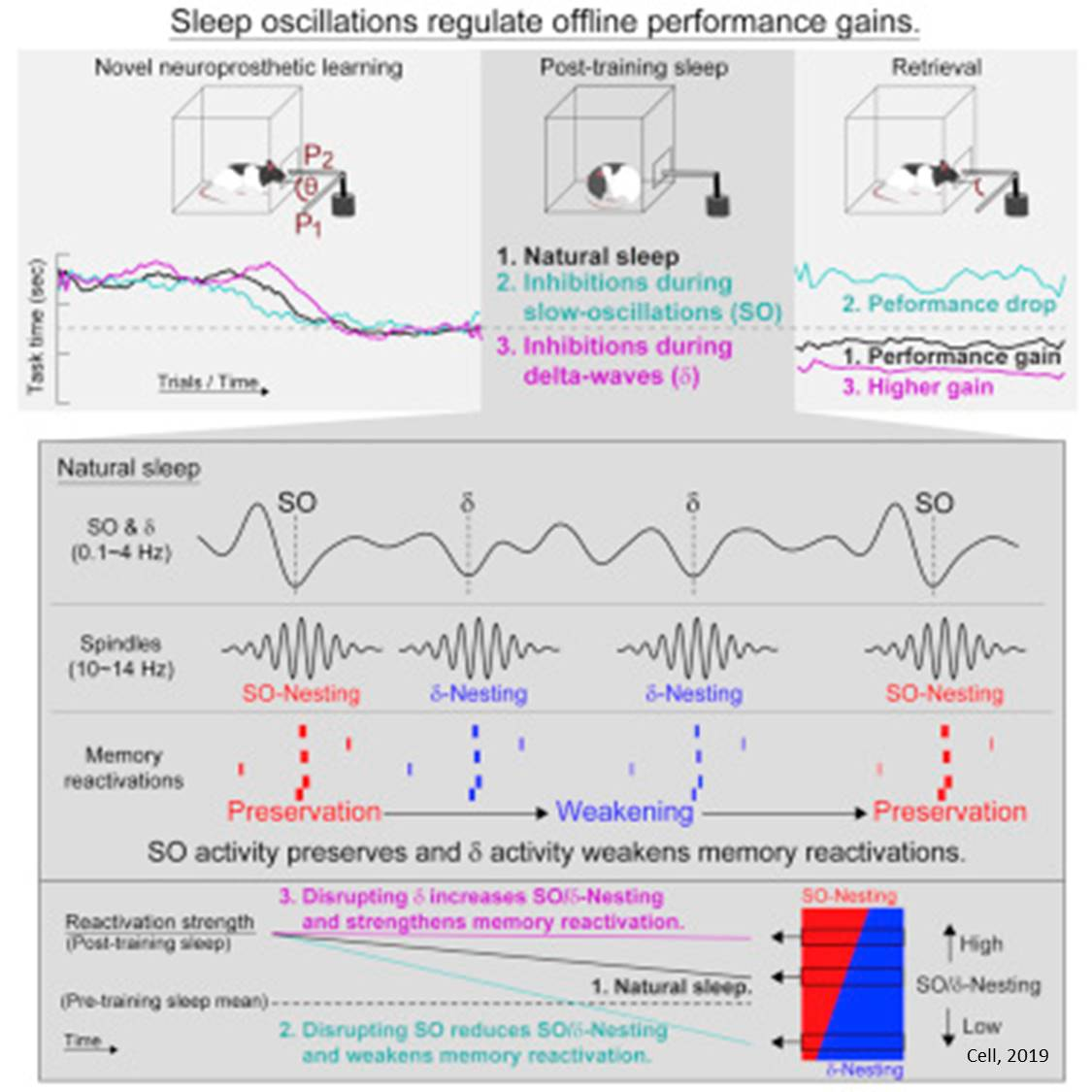 Manipulating brain waves in sleeping to enhance forgetting or learning