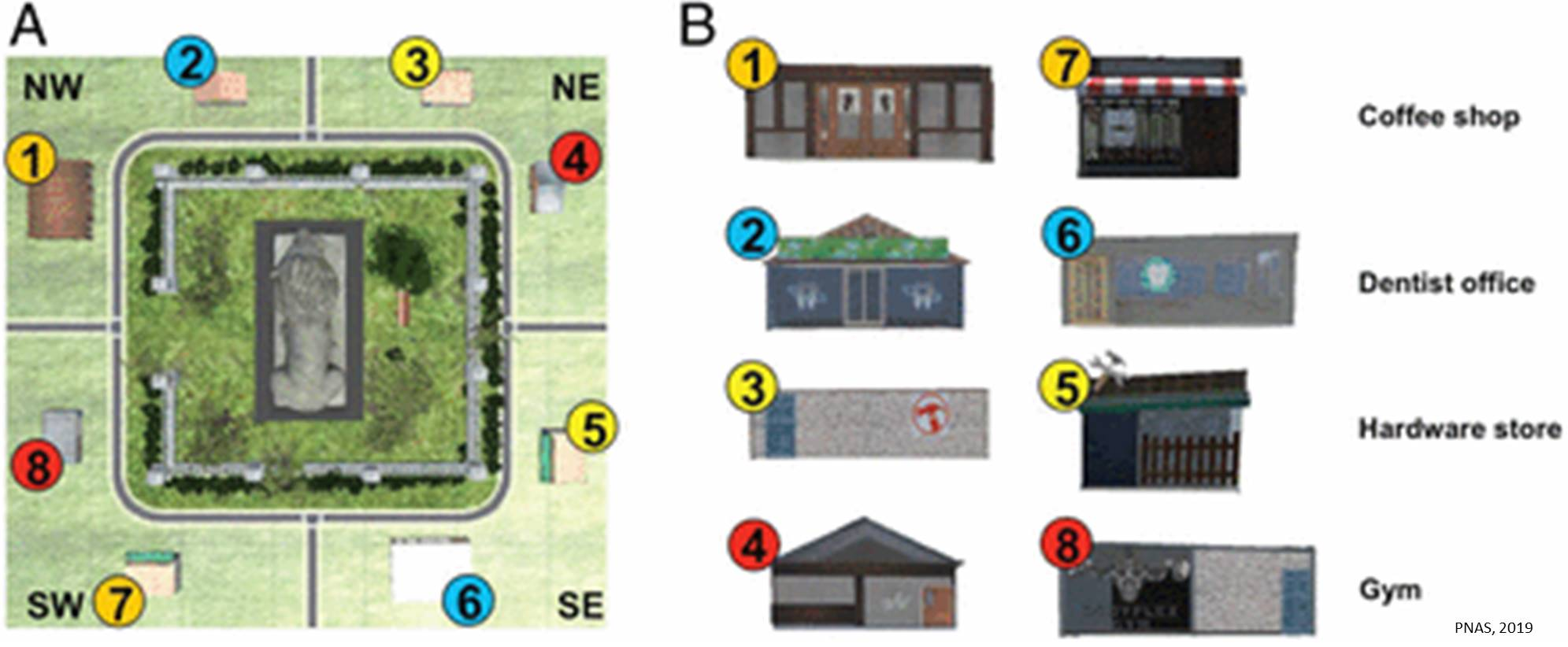 Virtual town model indicates distinct cortical regions have specialized role in navigation