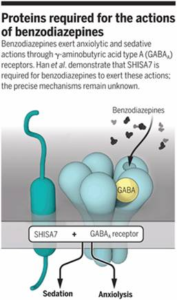A protein controlling benzodiazepine action identified!