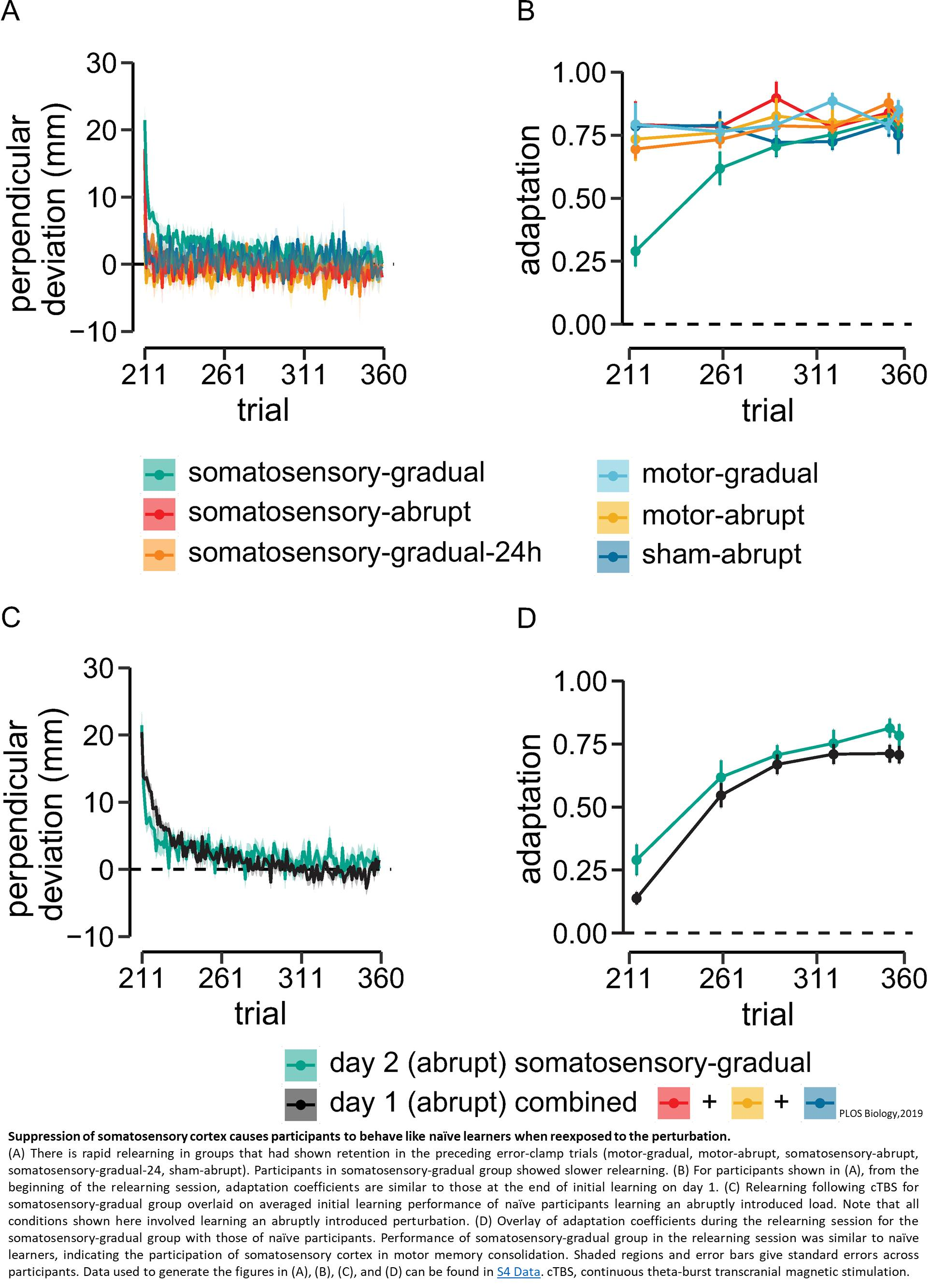 Somatosensory cortex is required for learning motor skills