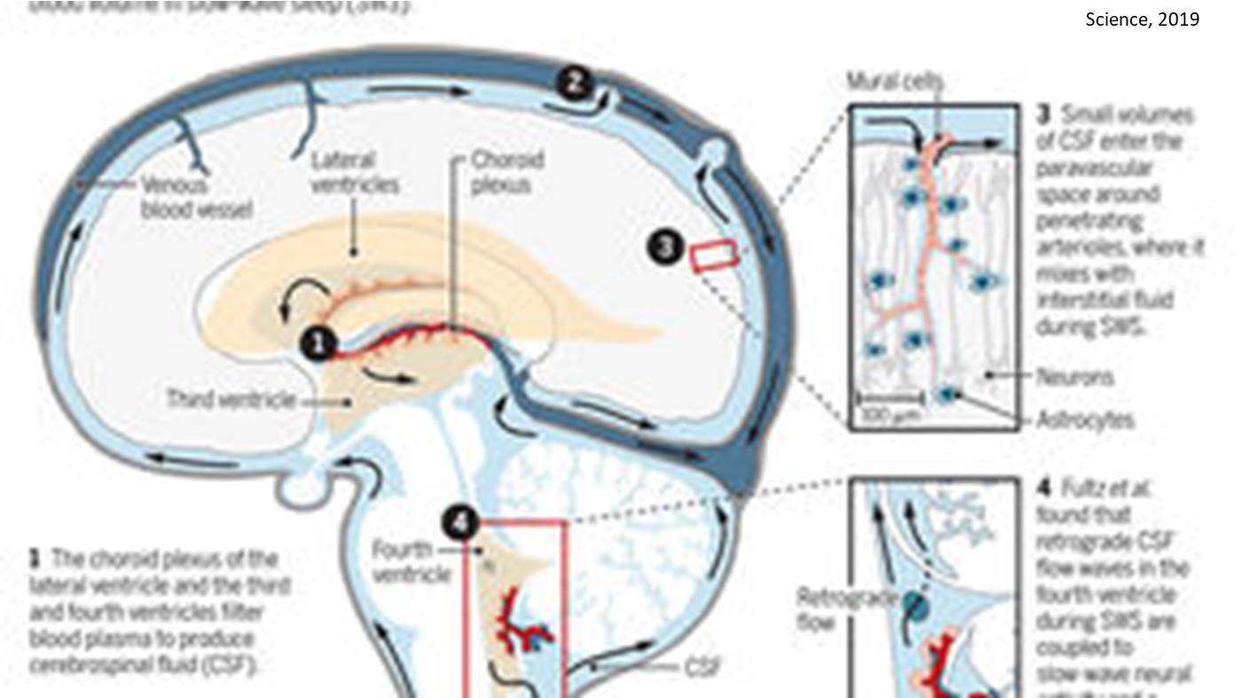 Brain wash images recorded for the first time during sleep!