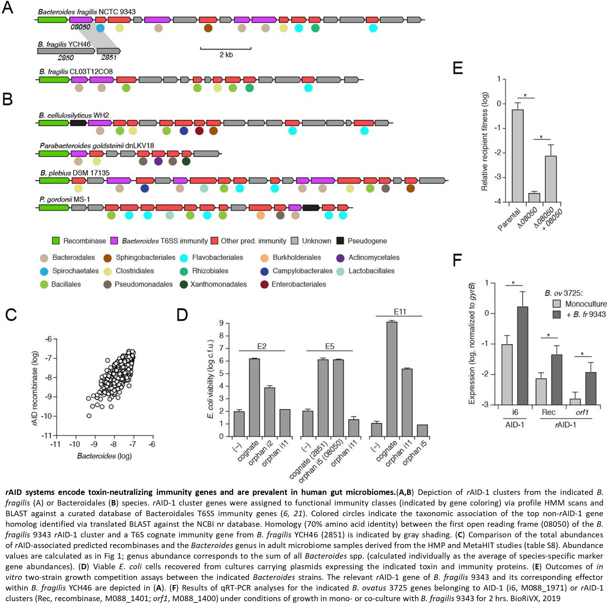 Immune gene clusters protect the bacteria against toxic attack by the rivals in the microbiome