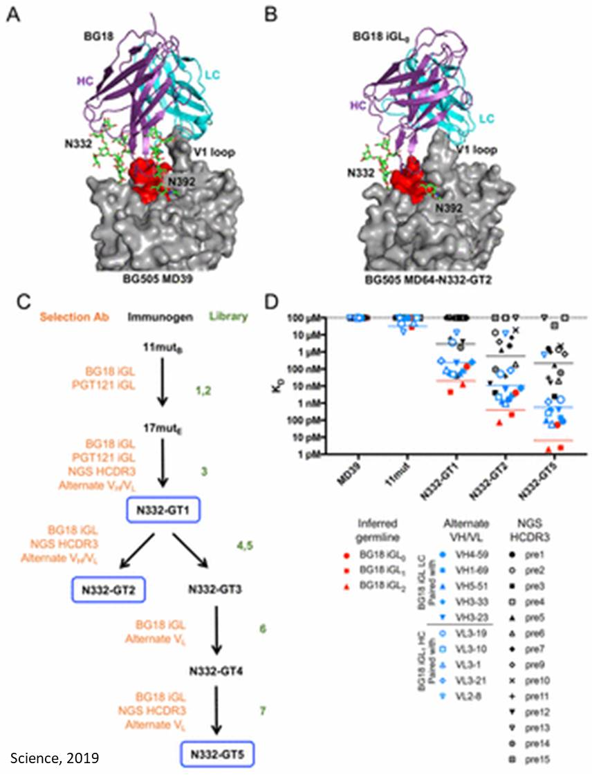 New strategy for broad neutralizing antibody to treat HIV