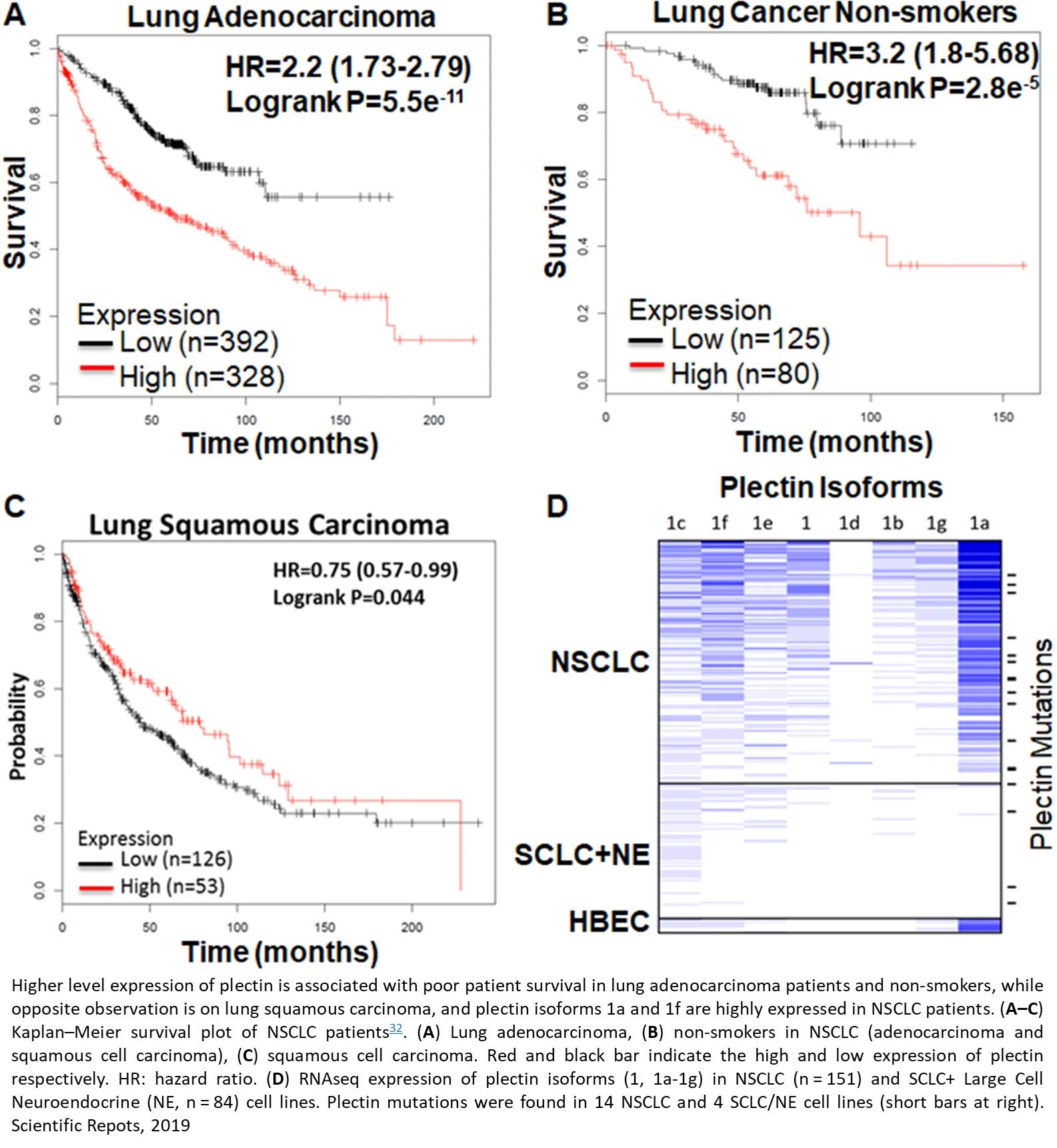 Plectin protein as a potential biomarker for lung cancer stem cells
