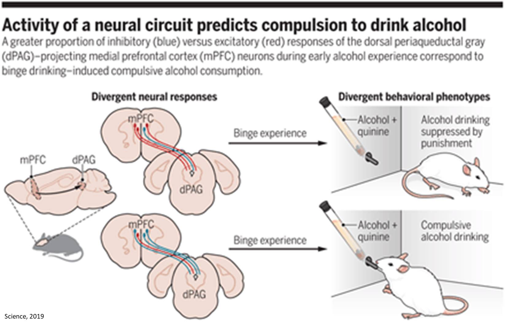 Why some cannot stop drinking!