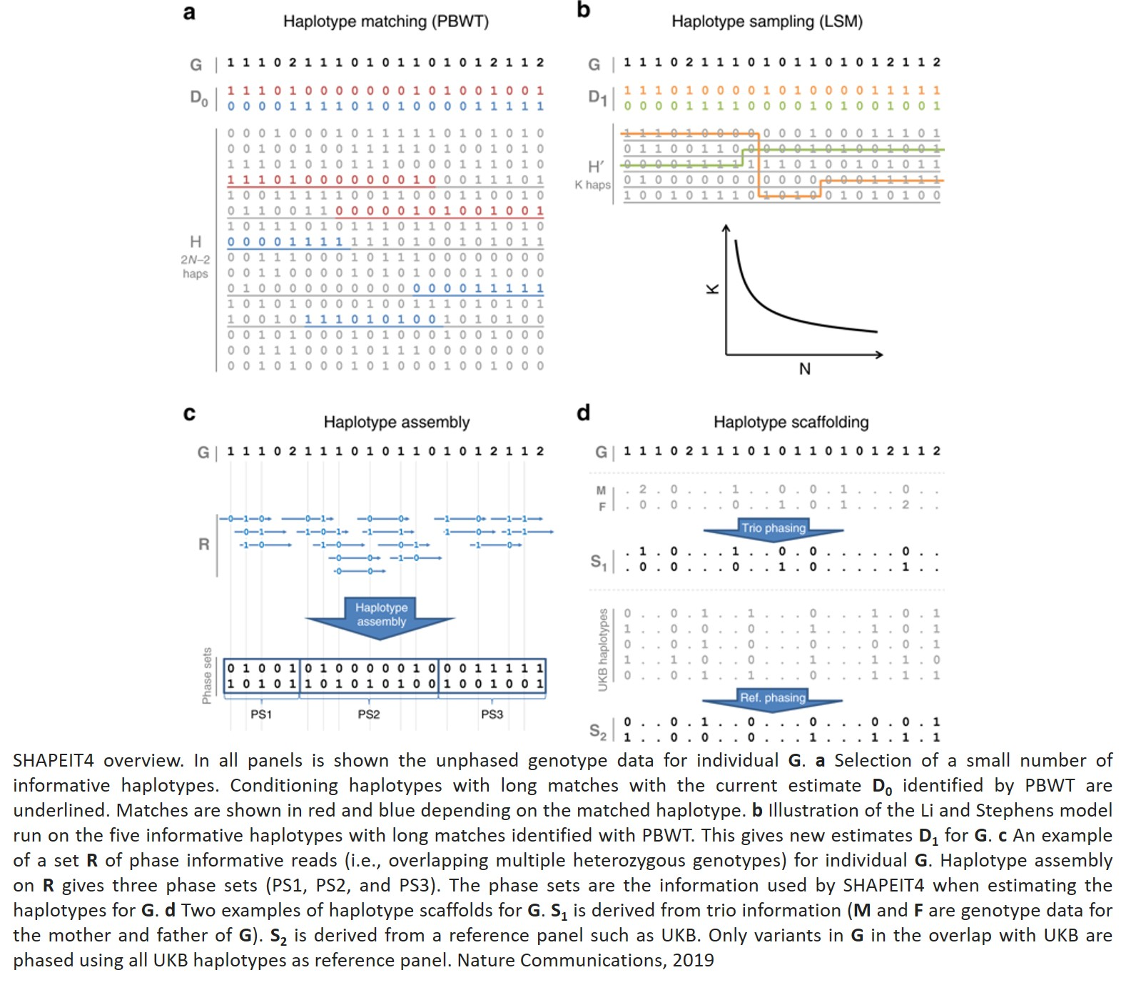Accurate, scalable and integrative haplotype estimation
