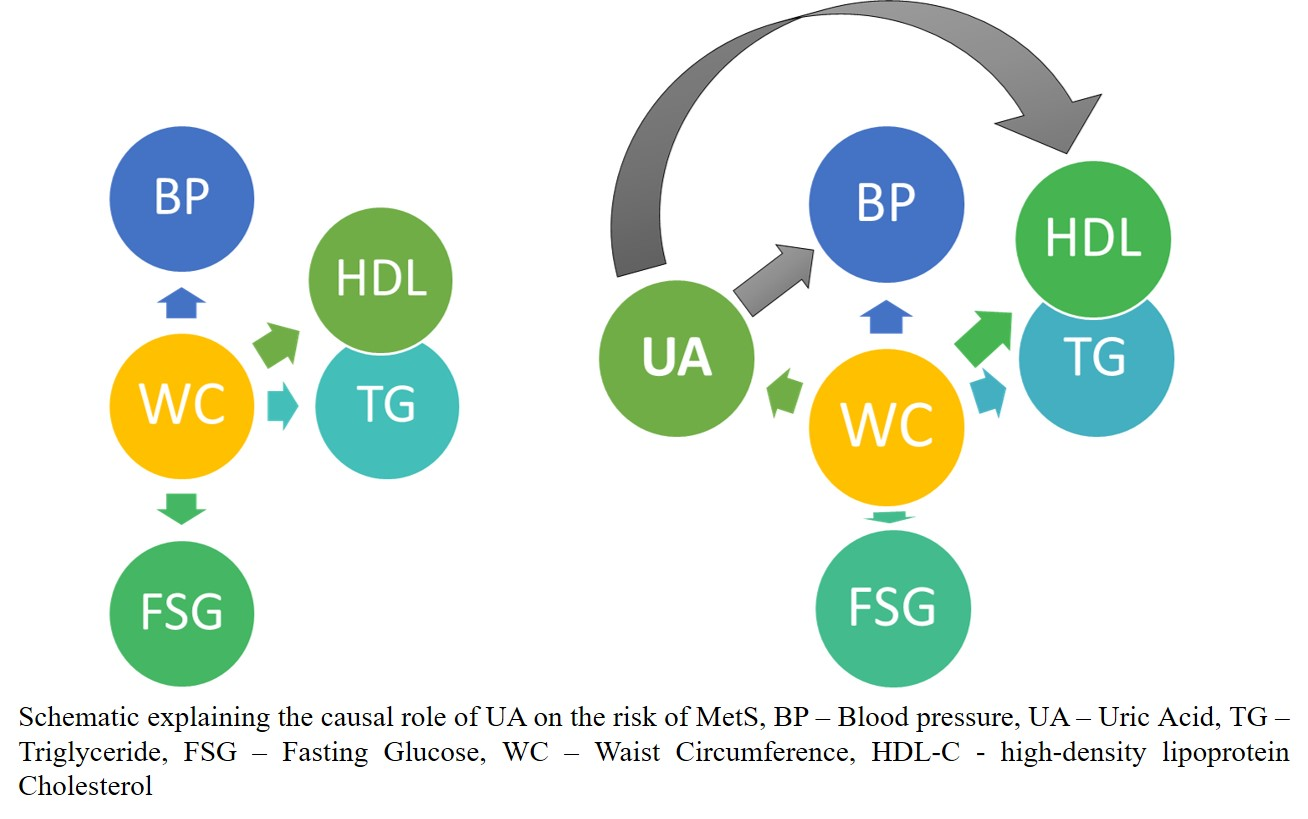 Role of Uric Acid and Central Obesity On the Risk of Metabolic Syndrome
