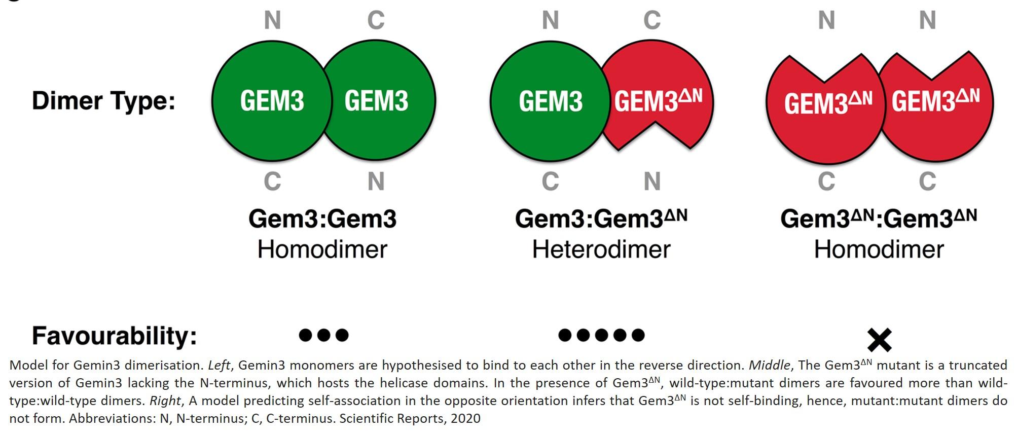 Link between ALS genes identified!