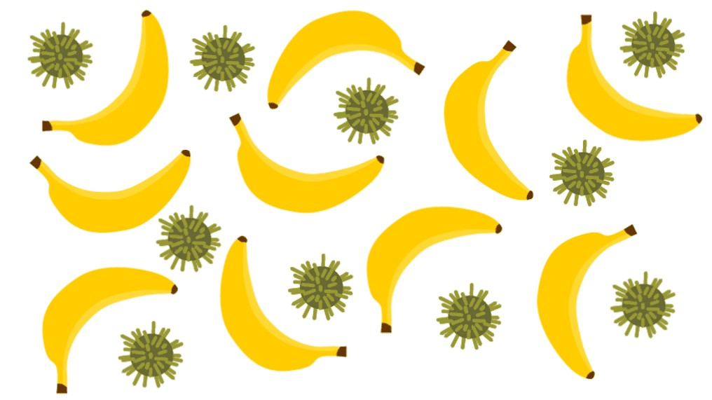 Banana Lectin Offers Hope Against Deadly Flu