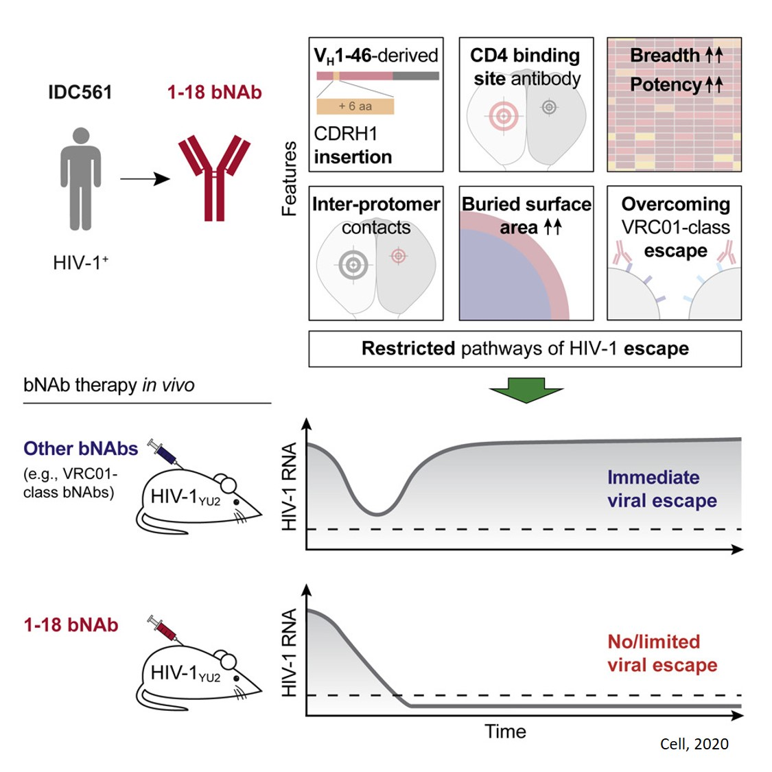 Broad and Potent Neutralizing Antibody Restricts HIV-1 Escape