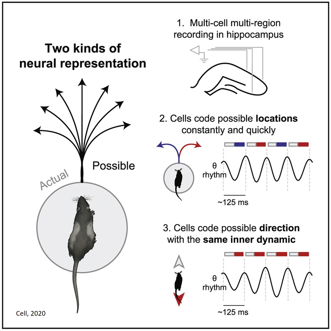 New insights into neurobiology of decision-making and imagination