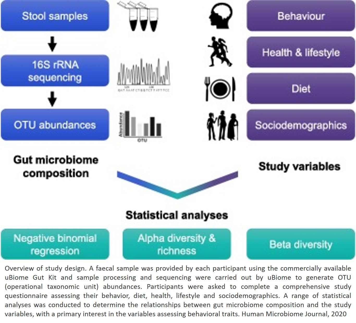 Gut bacteria linked to personality