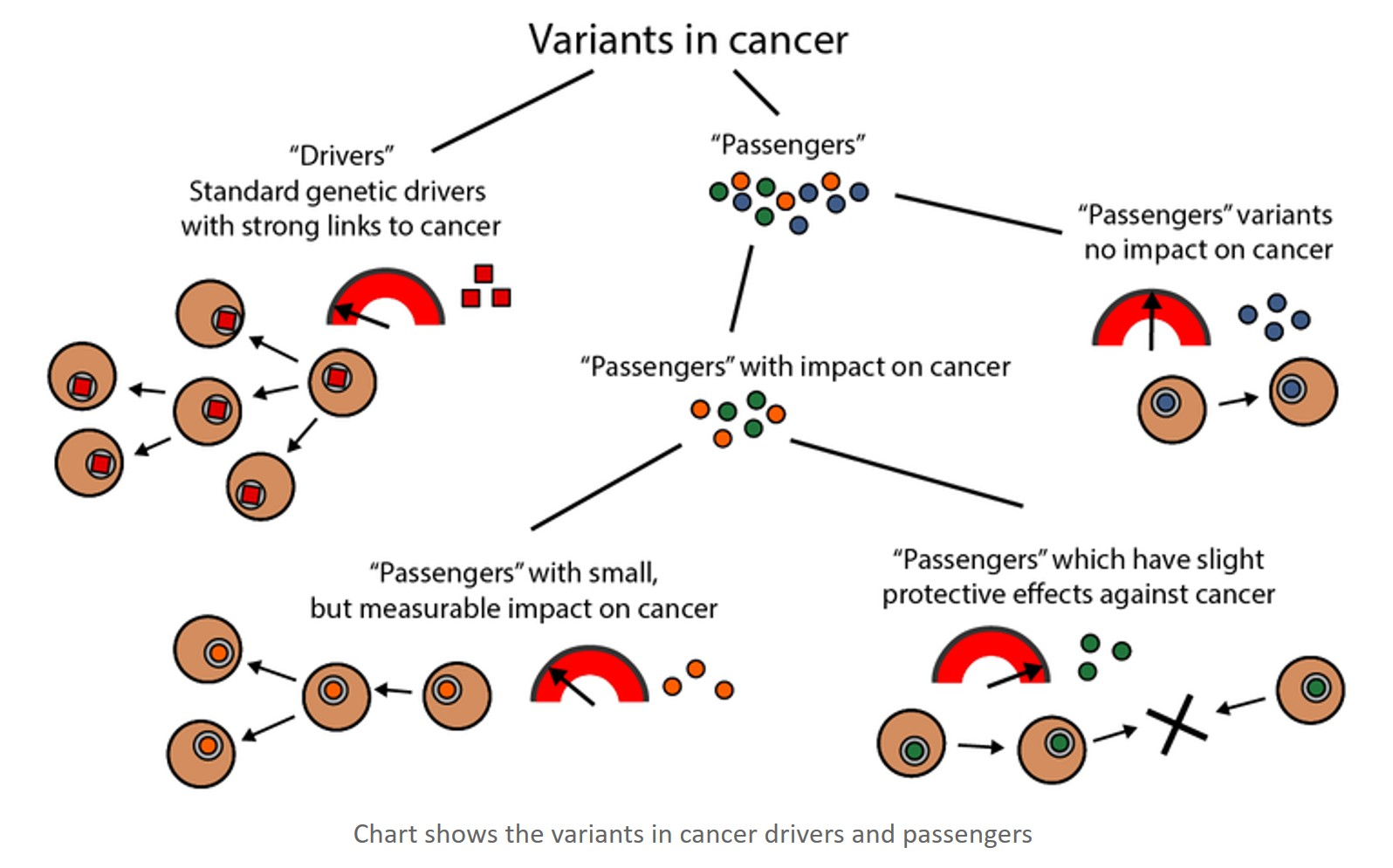 "The role of ""passengers"" in cancer development"