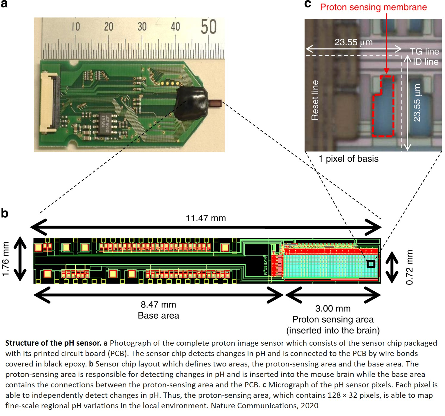 A sensor to detect pH changes in the brain!
