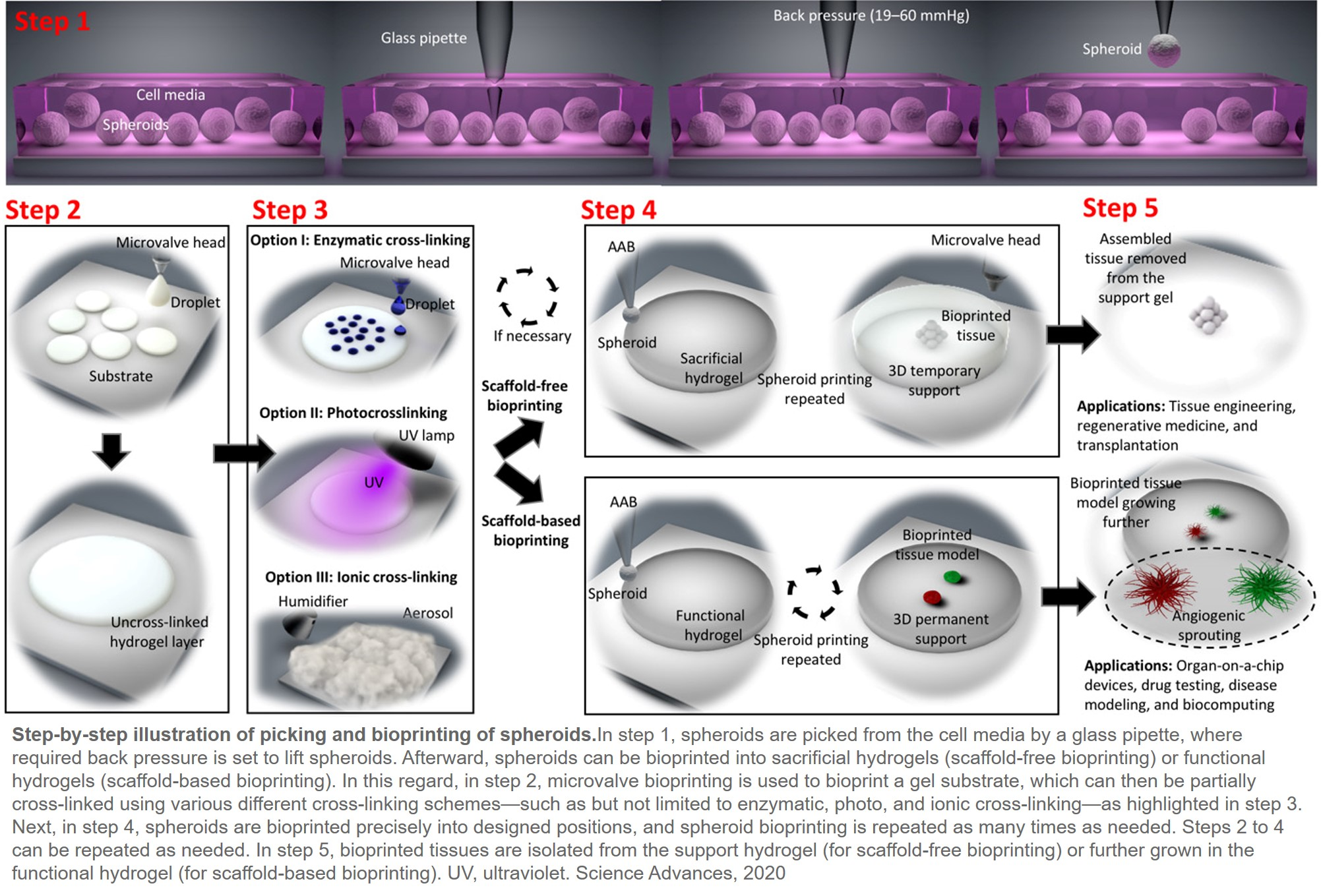 Aspiration assisted printing spheroids for drug discovery