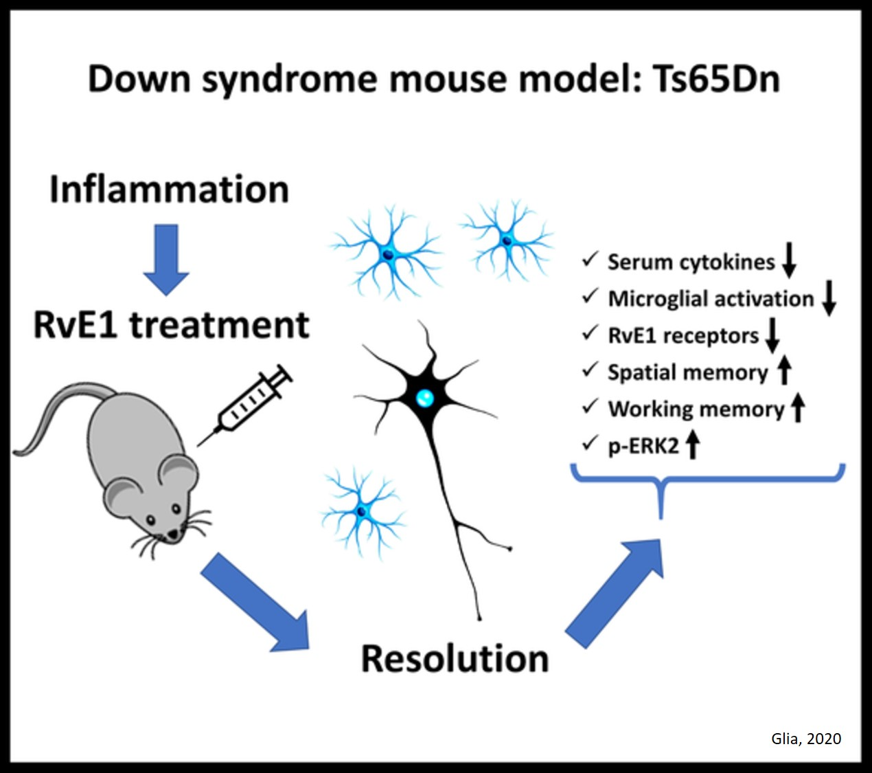 Resolving inflammation prevents memory loss in Down syndrome and Alzheimer's