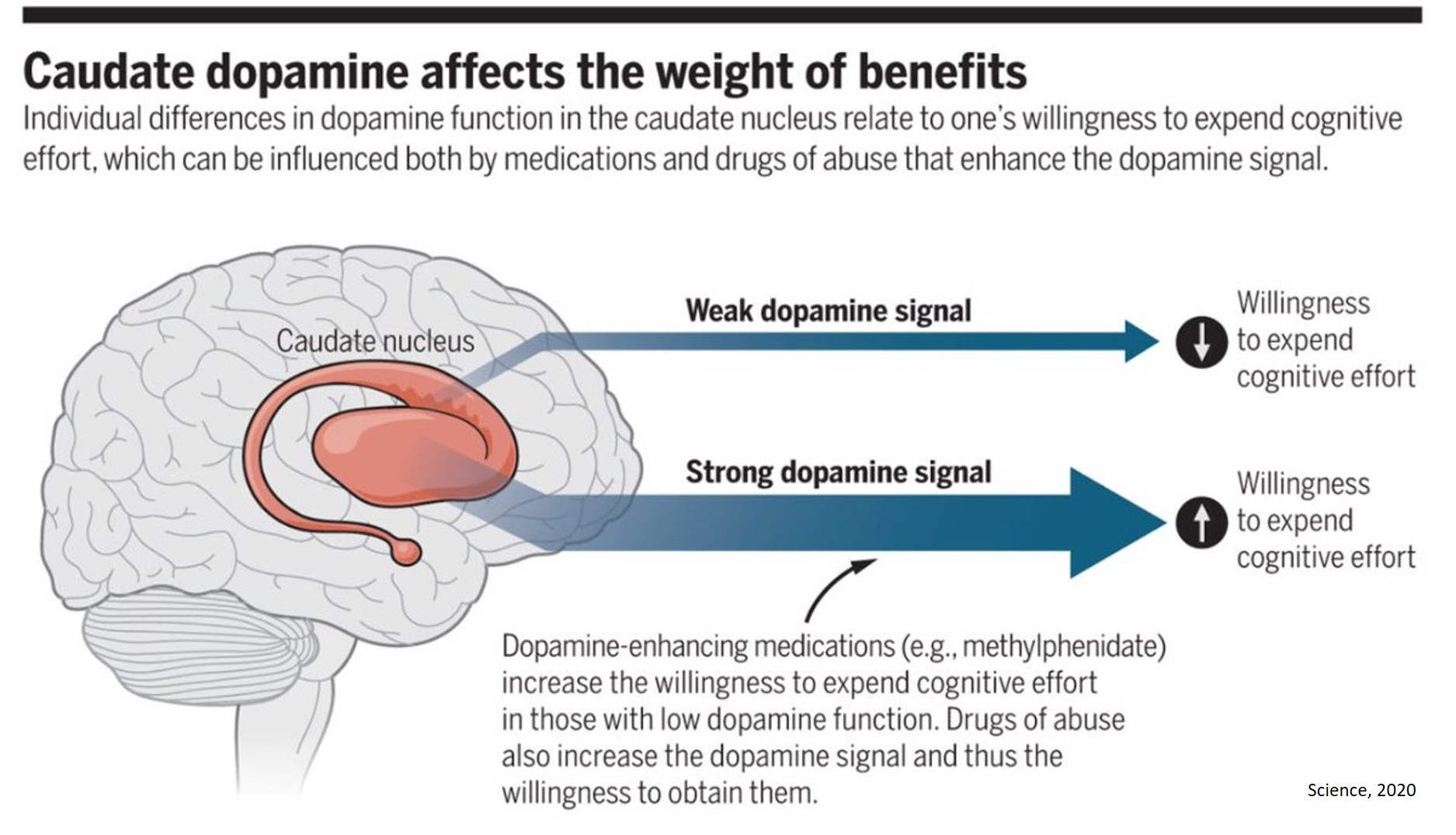 How stimulants alter cognitive function