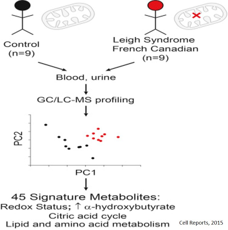 A Metabolic Signature of Mitochondrial Dysfunction