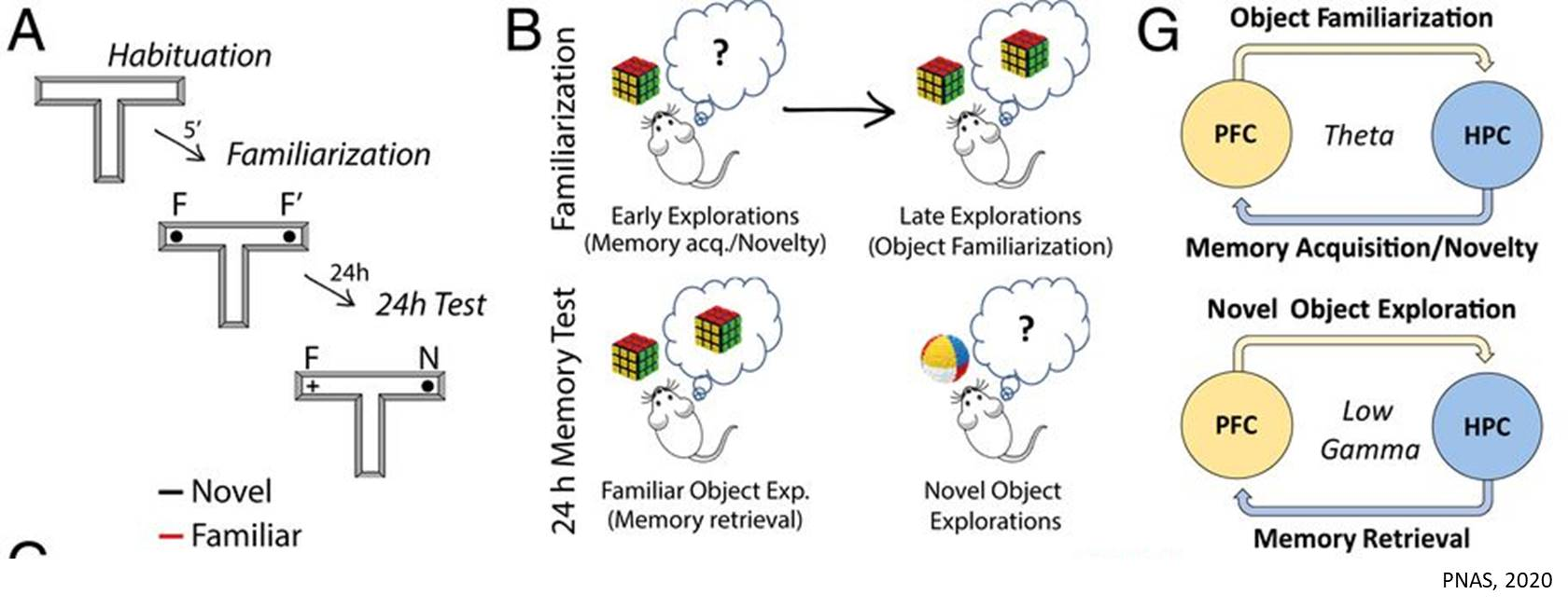 Over-active and poor connectivity in brain circuitry in Down syndrome