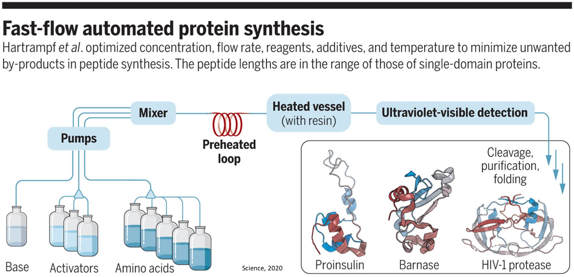 Automated flow synthesis of proteins in the lab