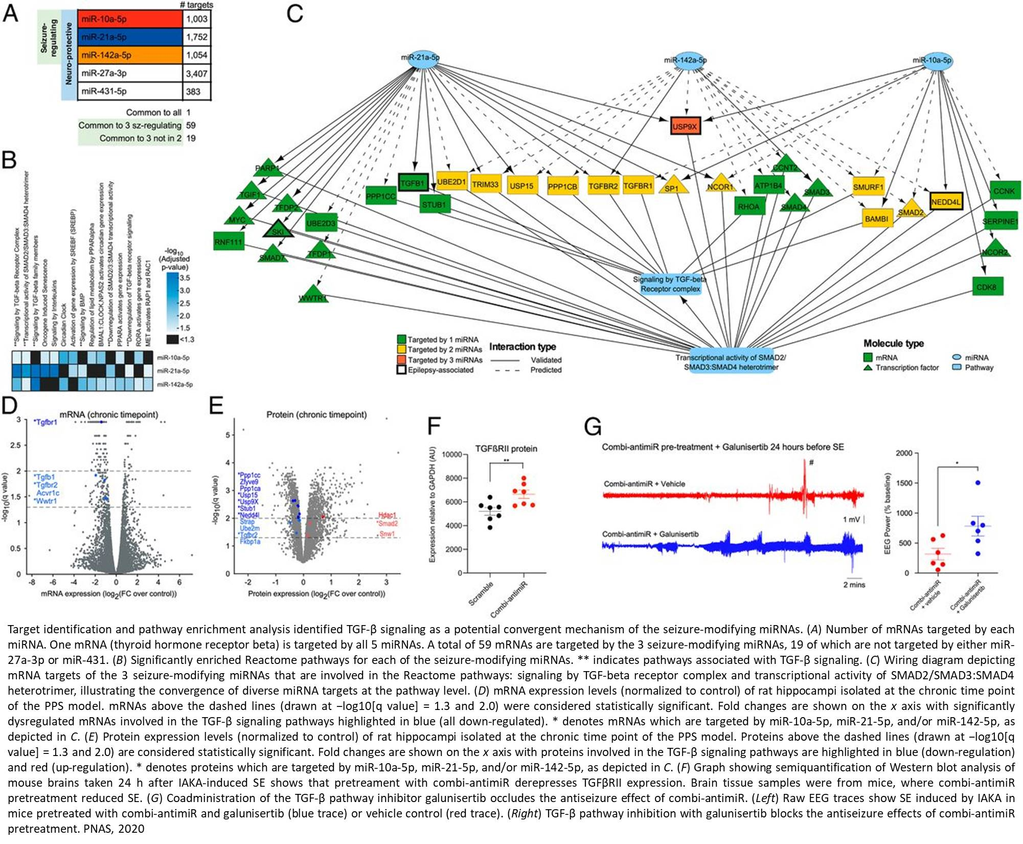 MicroRNAs as potential new targets for treating epilepsy