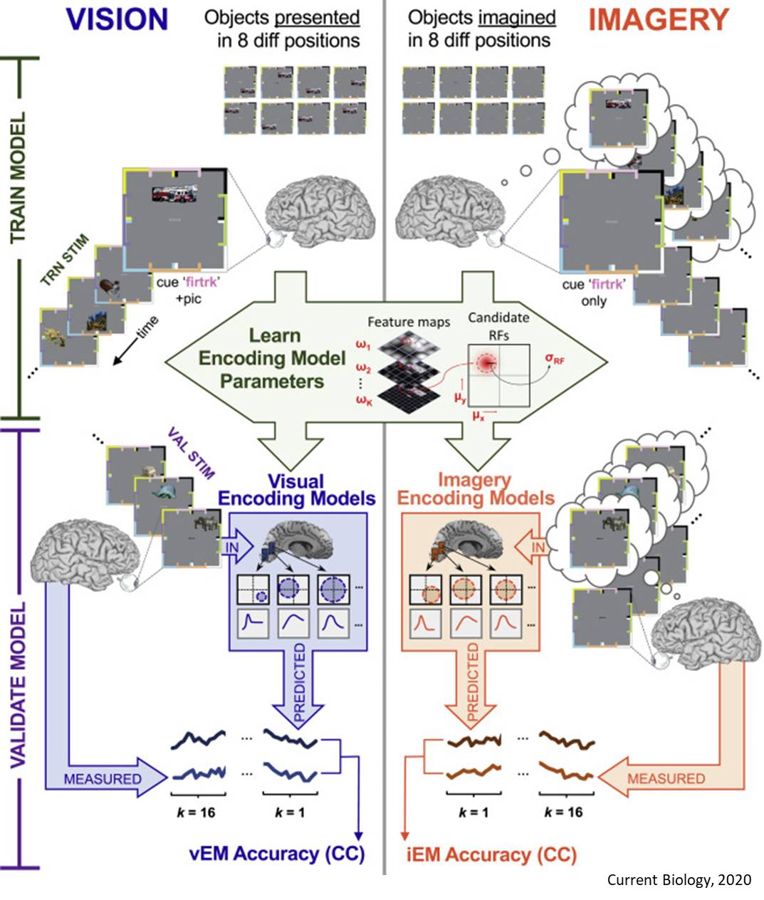 Distinct Brain Activity Codes for What We See and What We Imagine