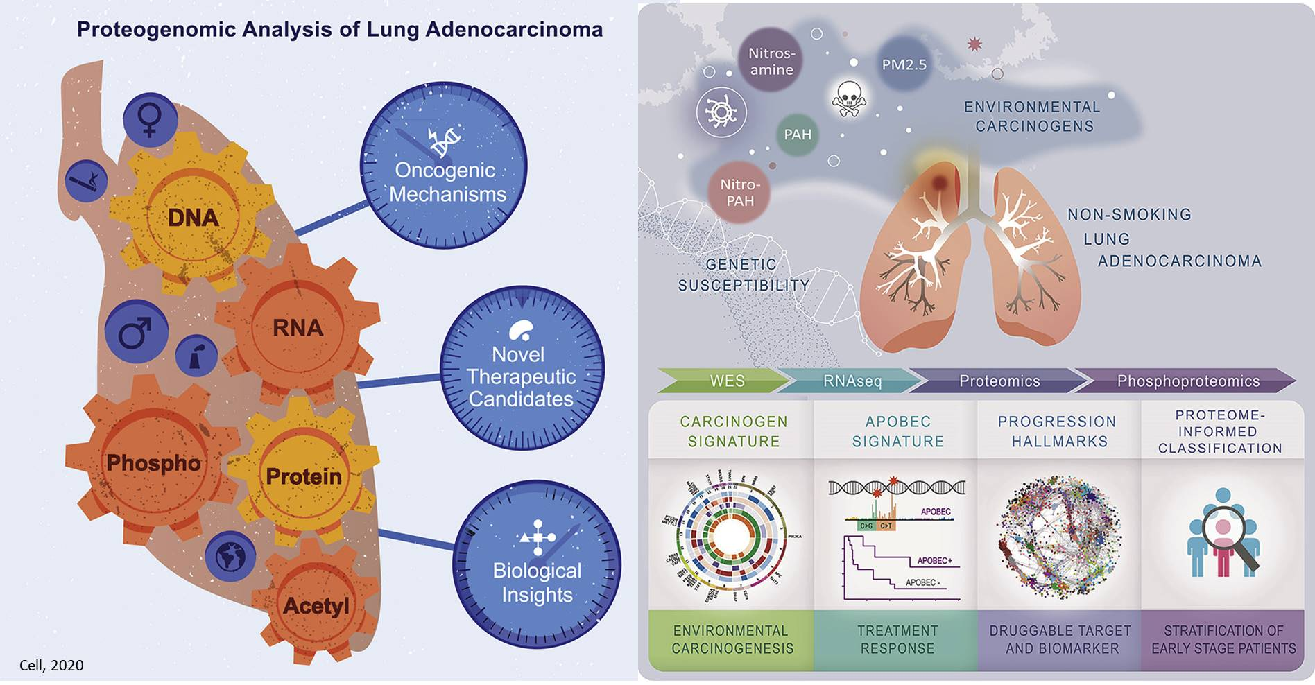 Proteogenomic Signatures of Non-smoking Lung Cancer are Different!