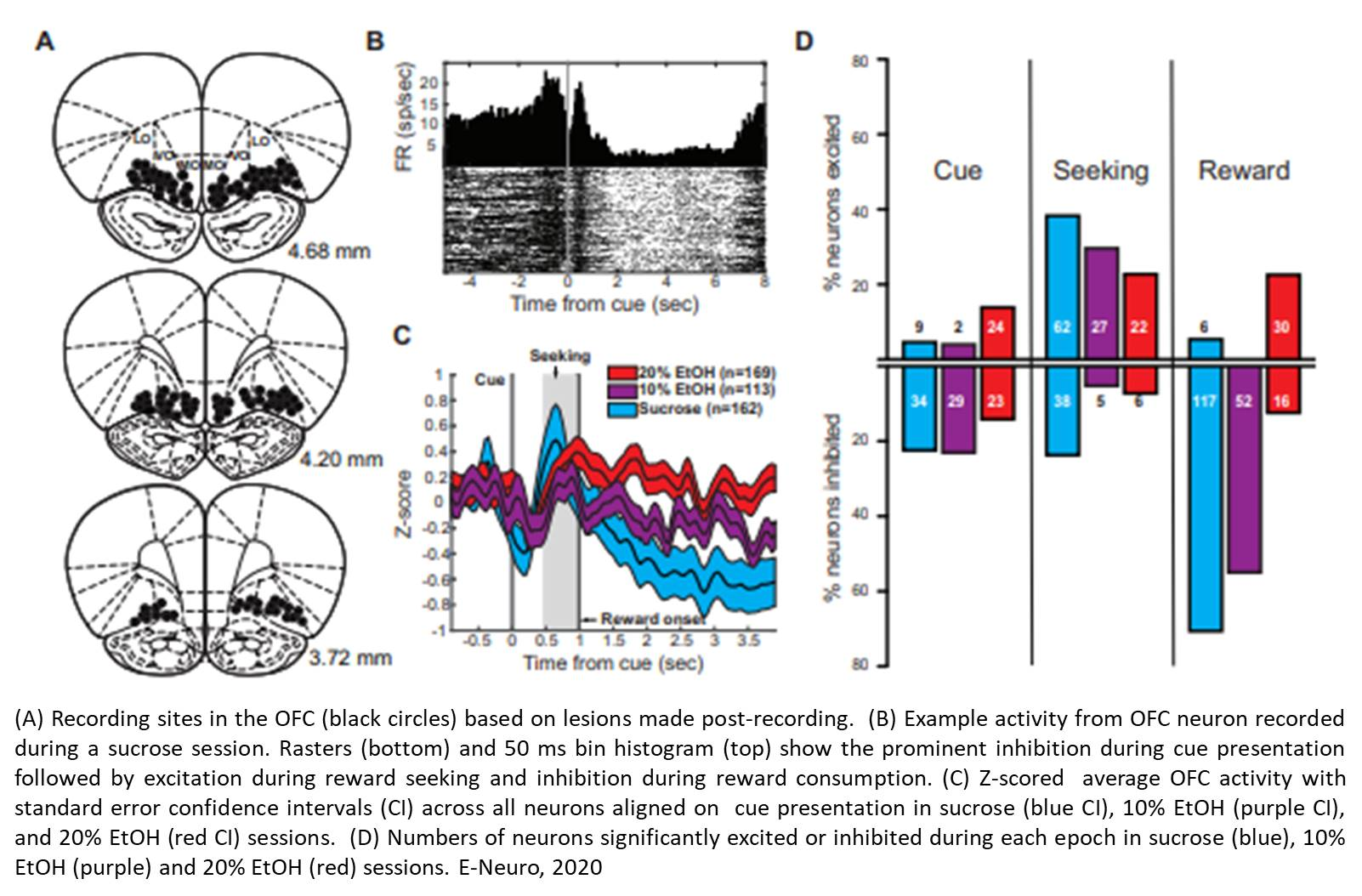 Preference for alcohol encoded by orbitofrontal cortex