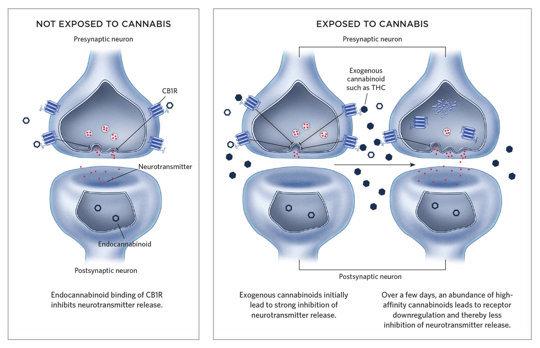 Autism risk from cannabis use during pregnancy