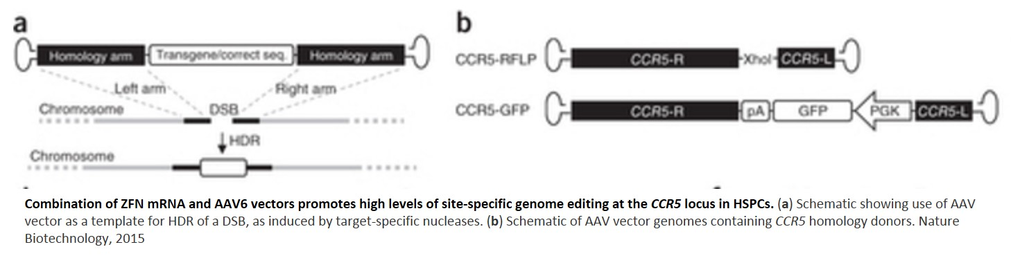 Advanced genome editing of blood stem cells