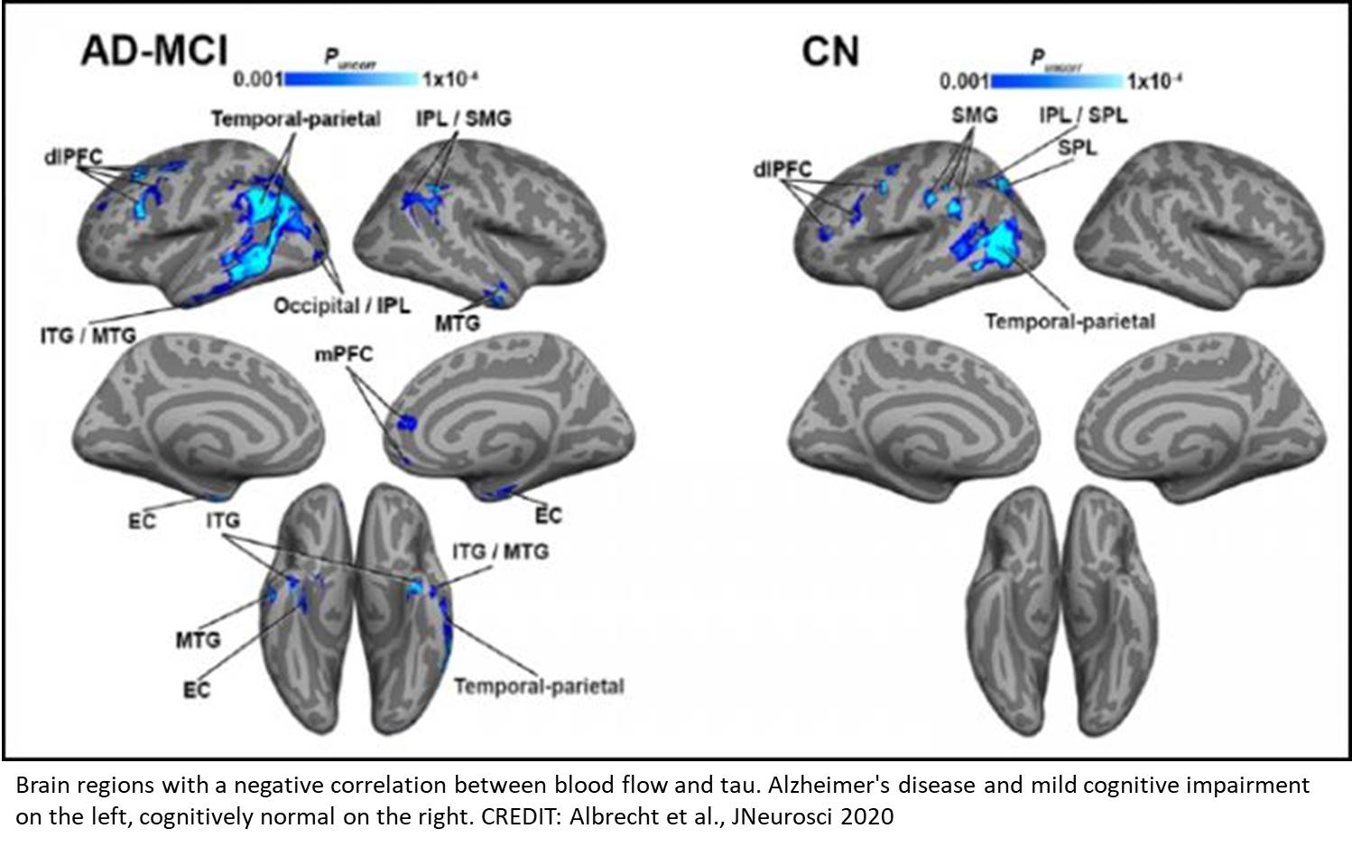 Linking vascular function to tau PET with declining cognition