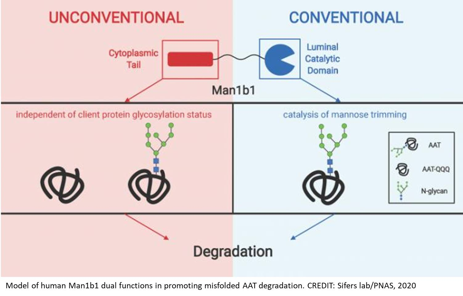 A novel mechanism for disposing of misfolded proteins