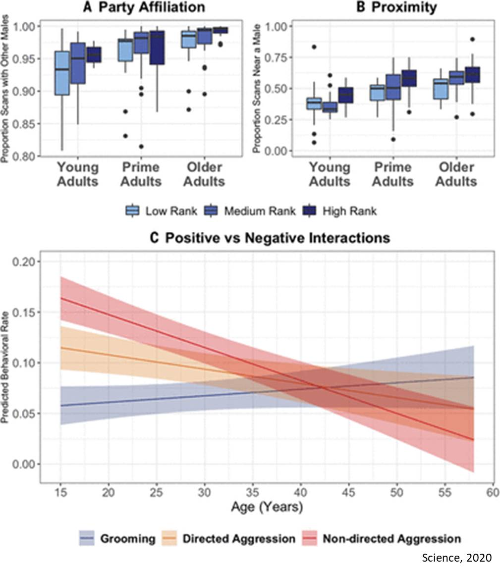 Social selectivity during aging