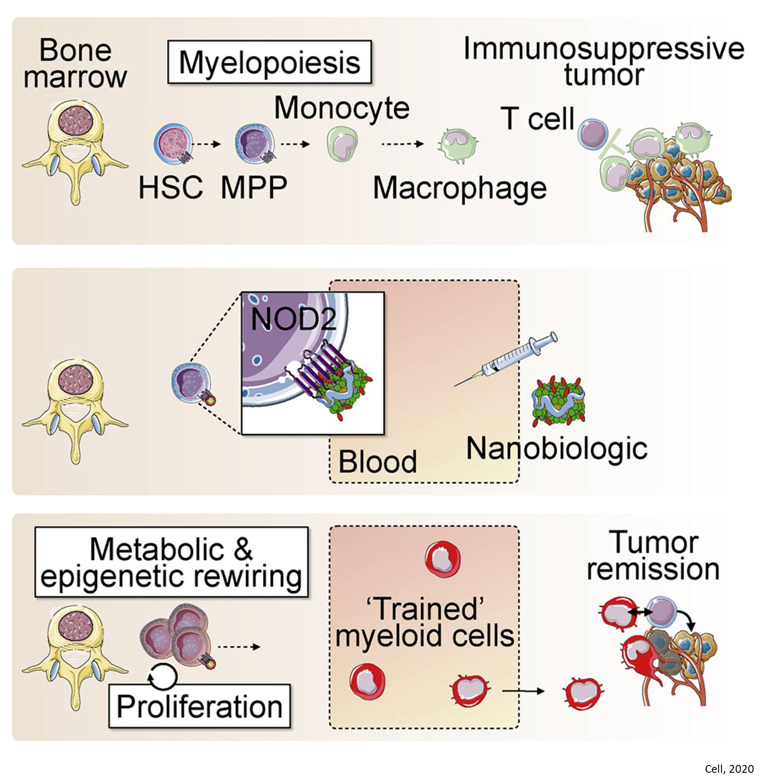 Nanomaterials to help body's immune system fight cancer
