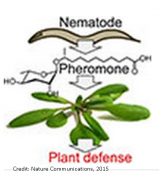 Plant recognition of an animal-derived signalling molecule