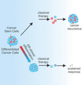 ER-stress-induced differentiation sensitizes colon cancer stem cells to chemotherapy